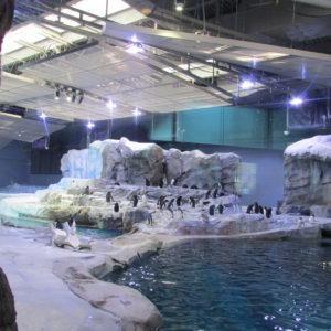 Detroit Zoo MemberFest