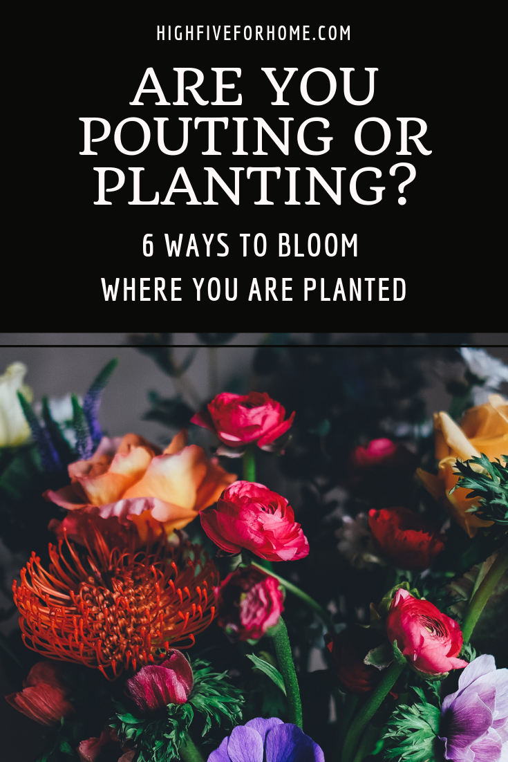 Are You Pouting or Planting? Part 2