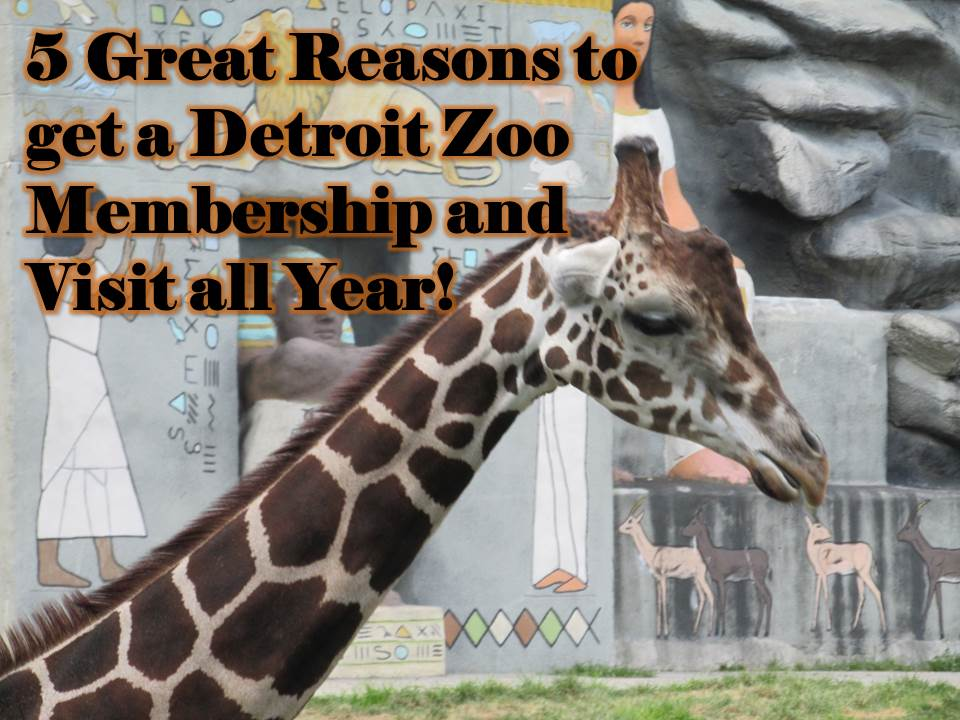 5 Great Reasons to Get a Detroit Zoo Membership and Visit all Year